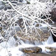 White Oak Run With Snow Art Print