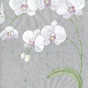 White Orchids On Sprigs  Art Print