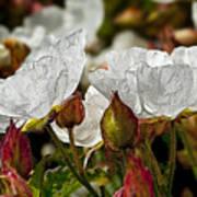White Paper Petals Art Print