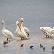 White Pelicans And Friends Art Print