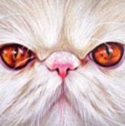 White Persian Cat Art Print