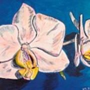 White Phalaenopsis Orchids Art Print