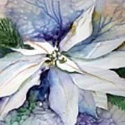 White Poinsettia Print by Mindy Newman