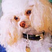 White Poodle Print by Jai Johnson