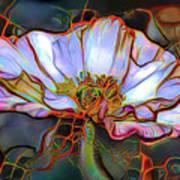 White Poppy Flower Art Print