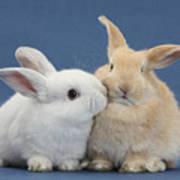 White Rabbit And Sandy Rabbit Art Print