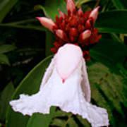 White Rainforest Flower Art Print