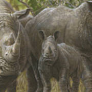 White Rhino Family - The Face That Only A Mother Could Love Art Print