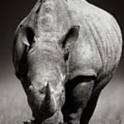White Rhinoceros  In Due-tone Art Print