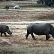 White Rhino's Art Print