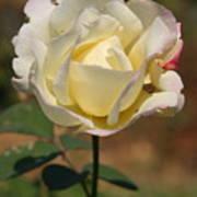 White Rose Print by Donald Tusa