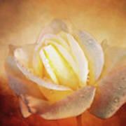 White Rose On Deep Texture Art Print
