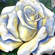 White Rose Two Art Print