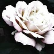 White Rose,stylization Art Print