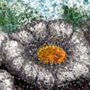 White Saguaro Cactus Blossom Art Print