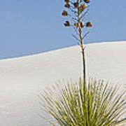 White Sands National Monument, Nm Art Print