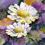 White Scabious Art Print