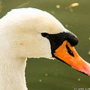 White Swan Profile Art Print