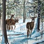 White Tail Deer In Winter Art Print