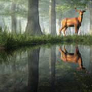 White Tailed Deer Reflected Art Print