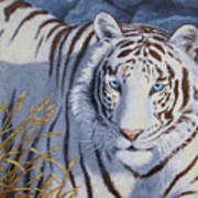 White Tiger - Crystal Eyes Print by Crista Forest
