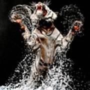 White Tiger Jumping In Water Art Print