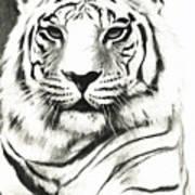 White Tiger Portrait Art Print