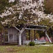White Tree And Old Barn Art Print