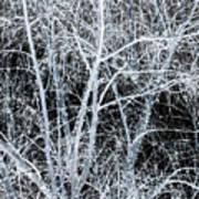 White Tree Black Night Art Print