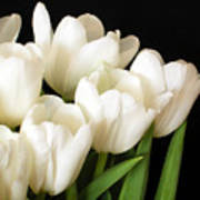 White Tulips 1 Art Print