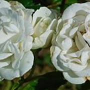 White Twin Flowers Art Print