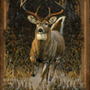 Whitetail Deer Art Print