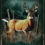 Whitetail Deer Art Print by JQ Licensing