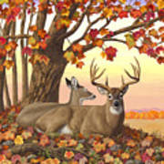 Whitetail Deer - Hilltop Retreat Print by Crista Forest