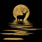 Whitetail Deer In The Moonlight Art Print