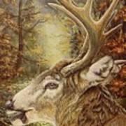 Whitetail Hideaway Art Print