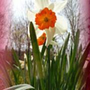 Who Planted Those Flowers Art Print