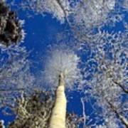 Who Shook The Tree Art Print