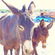 Who Wants A Blue Car When You Can Have Donkeys Art Print
