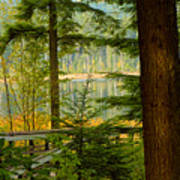 Whonnock Lake Through The Trees Art Print