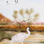 Whooping Cranes-jp3152 Art Print