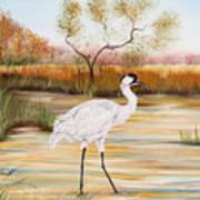 Whooping Cranes-jp3156 Art Print