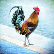 Why Did The Chicken... Art Print