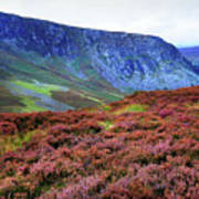 Wicklow Heather Carpet Art Print