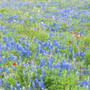 Wild About Wildflowers Of Texas. Art Print