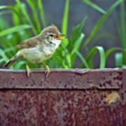 Wild Bird In A Natural Habitat.  Art Print