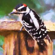 Wild Birds - Downy Woodpecker  Art Print
