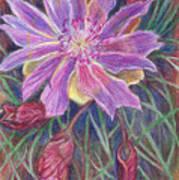 Wild Bitterroot Flower Art Print