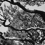 Wild Branches Art Print