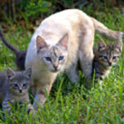 Wild Cats In Hialeah Art Print